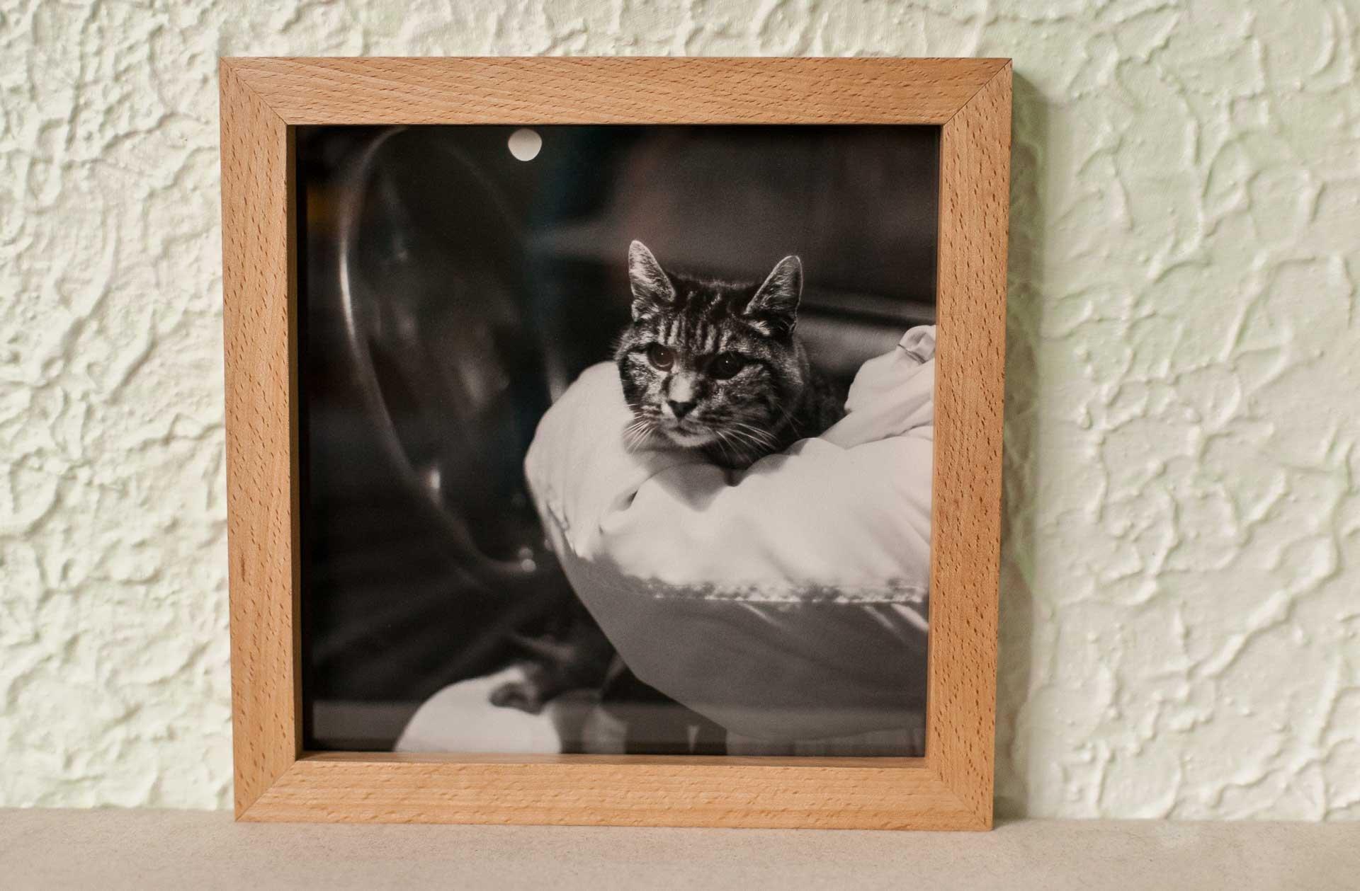 pennycat_beech_frame-1